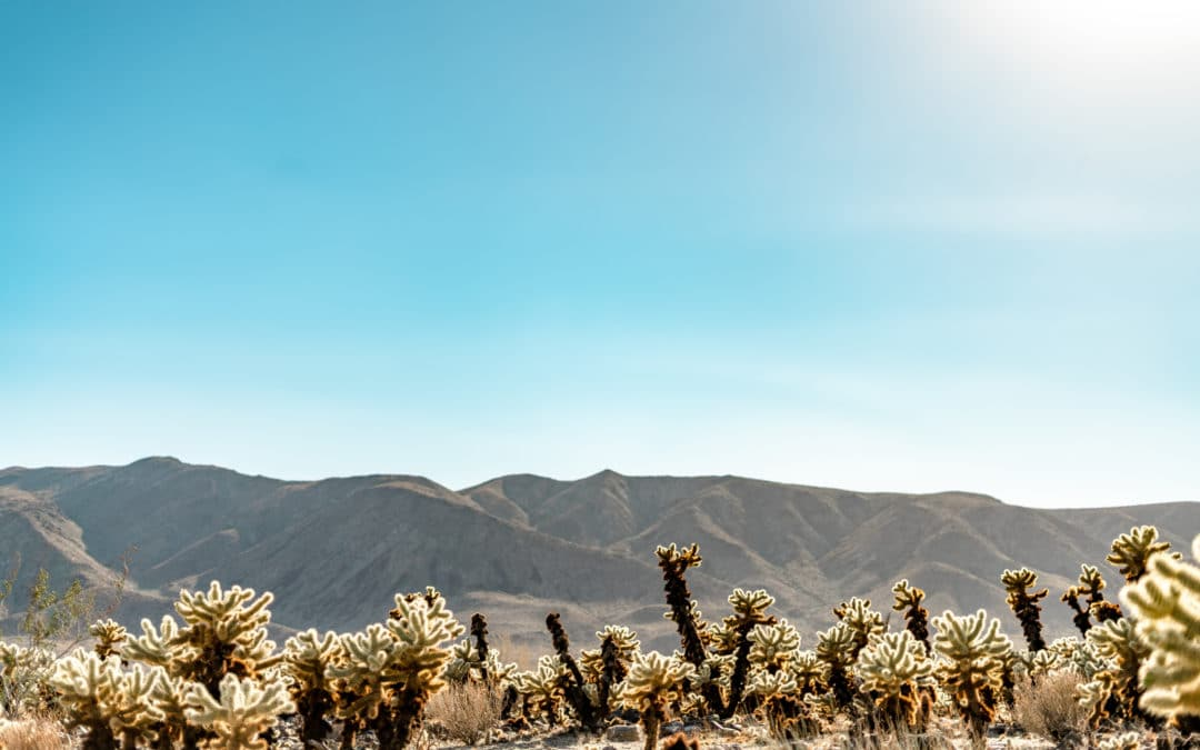 THREE DAYS IN JOSHUA TREE NATIONAL PARK
